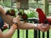 Vögelfüttern - Vogelfutter