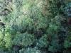Treetopwalk